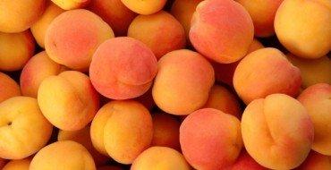 Урожай абрикос сорта Выносливый