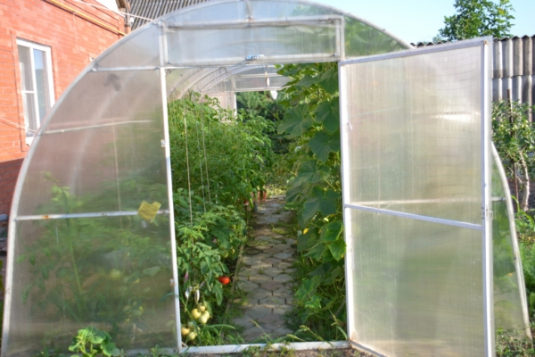 Фото томатов и огурцов в теплице