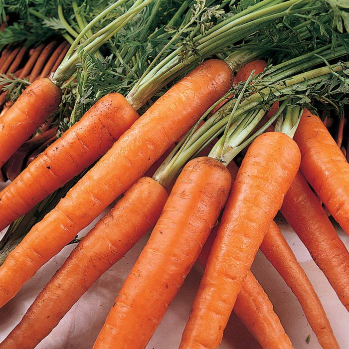 Боядера - сорт моркови на фото