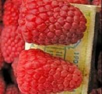 Ягоды малины на фото