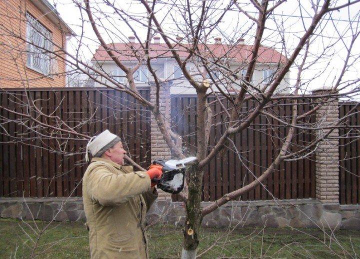 Садовник обрезает ветки осенью
