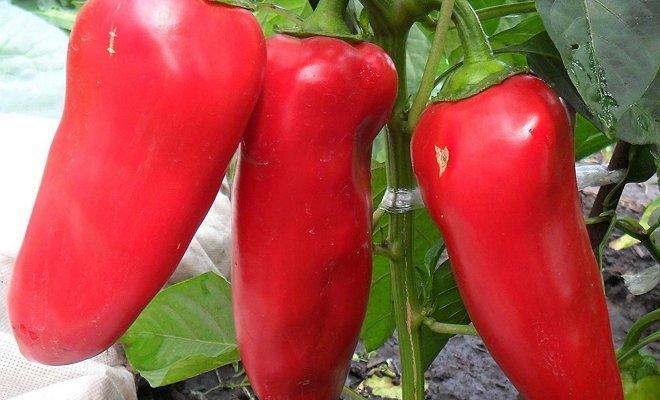 Красные овощи на снимке