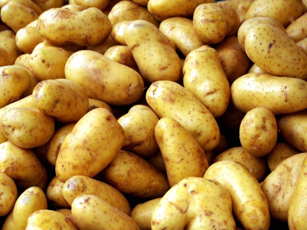 Картофель сорта Жуковский на фото