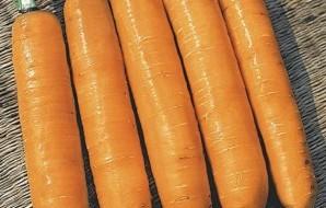 Сорт длинной моркови на фото