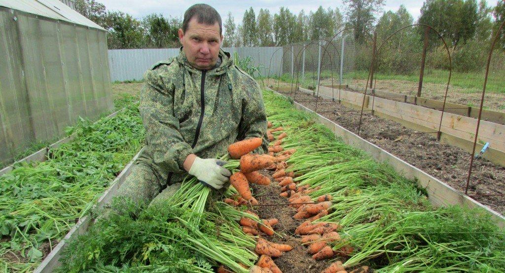 Подходящие сорта моркови для зимнего хранения