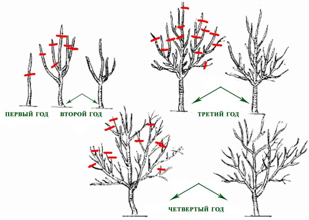 полив фруктовых деревьев весной