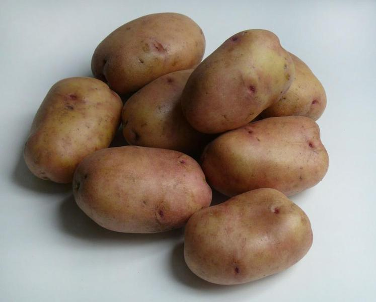 Картофель сорта беллароза на фото
