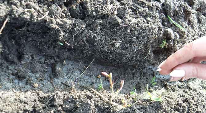 Важно соблюсти пропорции между семенами