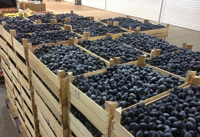 Урожай винограда в ящиках