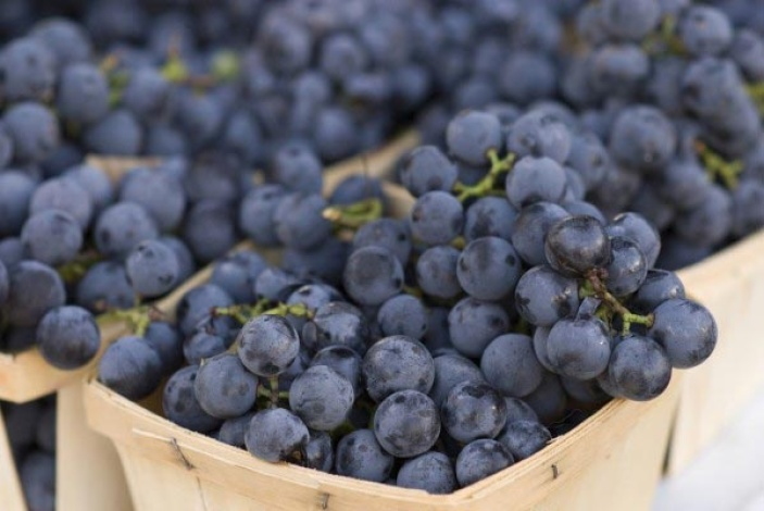 Урожай ягод Изабелла в коробках