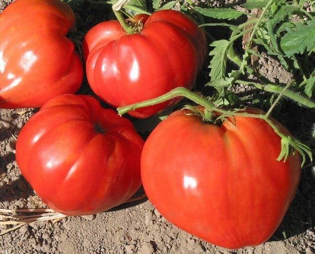 Несколько больших помидоров на фото