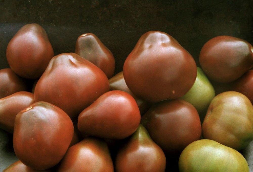 Несколько помидоров на снимке