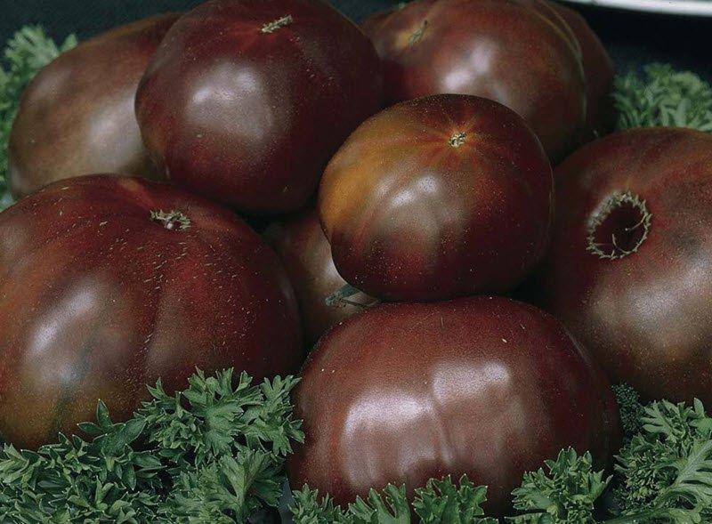 Темные томаты в листьях