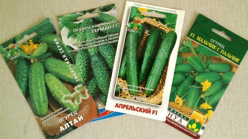 Семена огурцов в упаковках