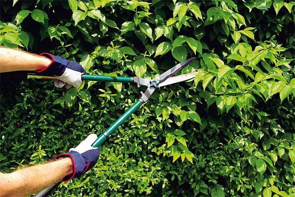 Большие садовые ножницы за работой