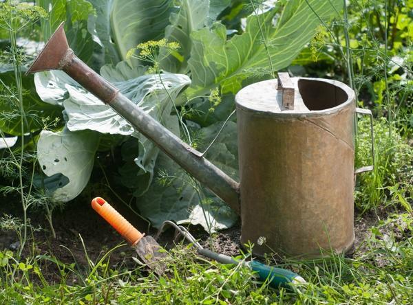 Лейка и огородные инструменты