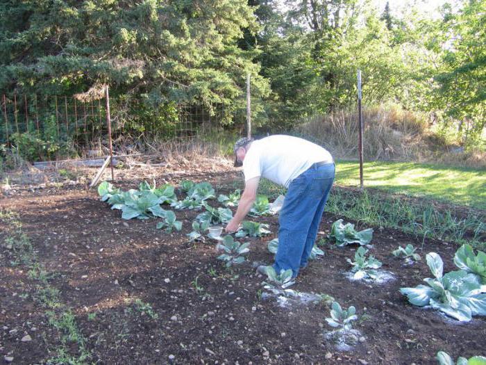 Уход за урожаем на огороде