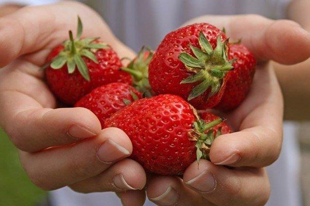 Как должны выглядеть здоровые ягоды