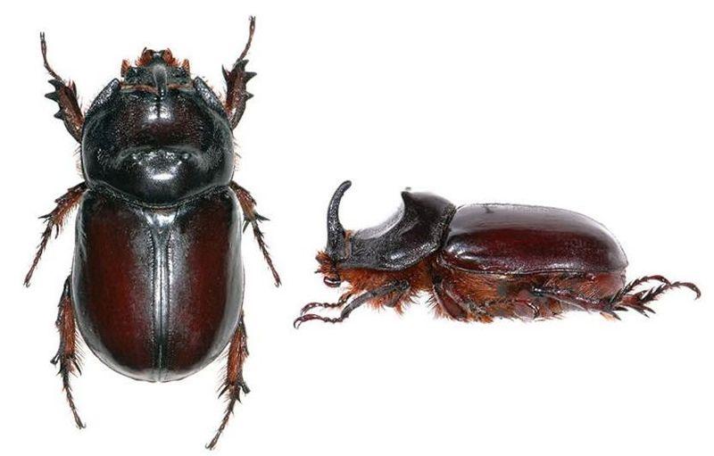Как выглядят личинки майского жука и способы борьбы с ними