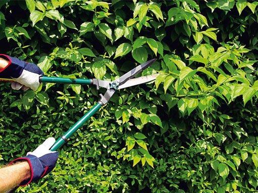 Садовые ножницы в работе