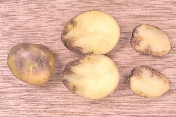 Фото картофеля, зараженного фитофторозом