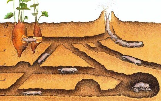 Схема передвижения под землей