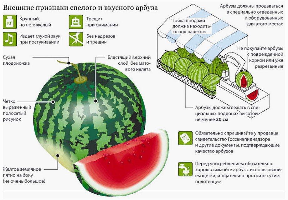 Схема по выбору и потреблению арбузов