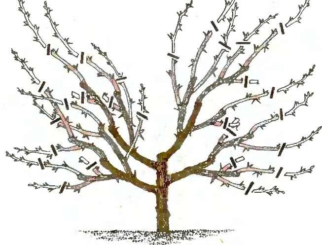 Как правильно купировать ветки дерева