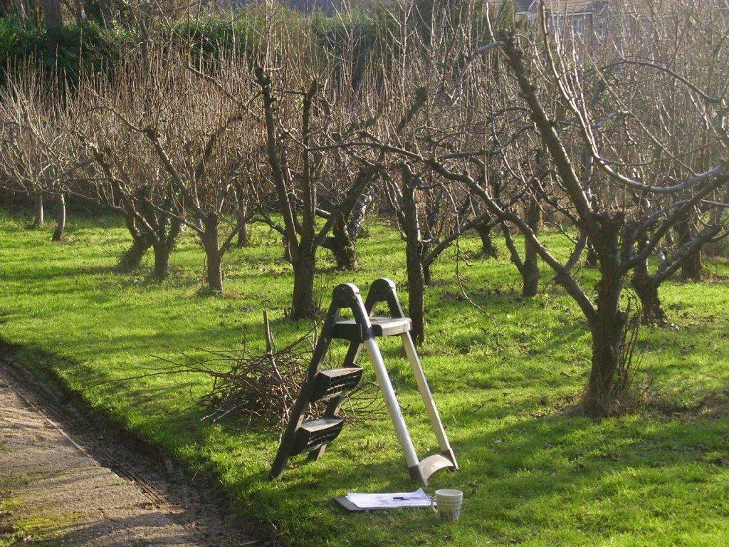 Стремянка в вишневом саду