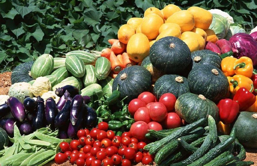 Гора спелых и здоровых овощей после препарата Немабакт