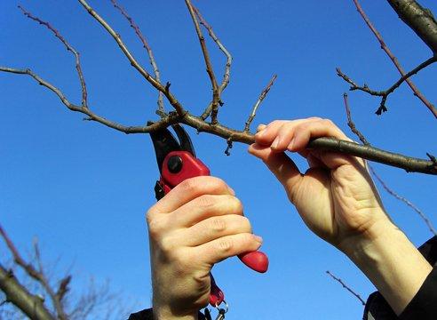 Пример работы с больным деревом весной