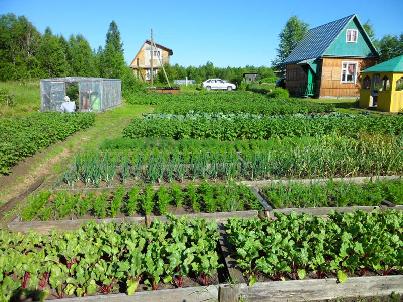 Правильное выращивание различных культур на даче
