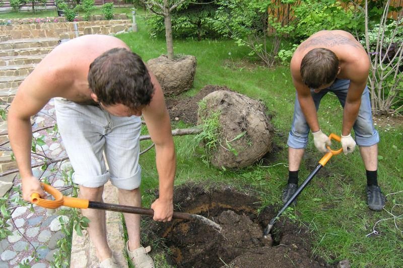 Парни выкапывают глубокую яму