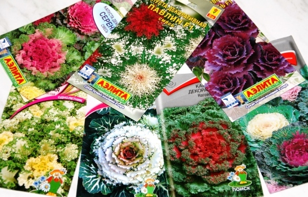 Семена разных сортов на фото