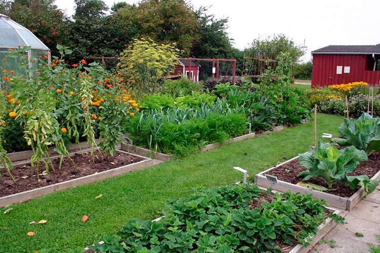 Какие овощи посадить рядом друг с другом