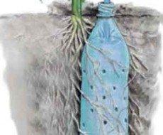 Принцип корневого полива из бутылки