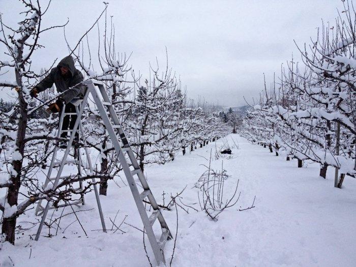 Работы в саду с деревьями