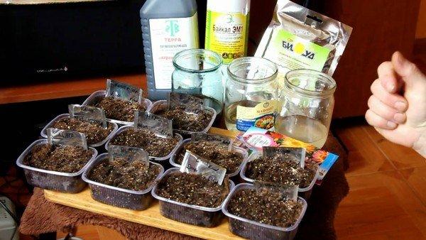 Необходимы ингредиенты для приготовления чая