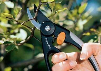 Секаторы садовые как выбрать инструмент правильно