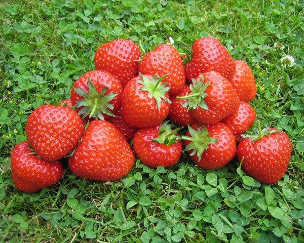 Несколько ягод на травке