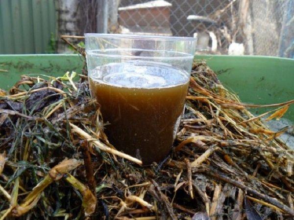 Готовый аэрированный компостный чай