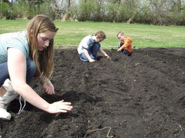 Посадка лука-севка в подготовленную почву