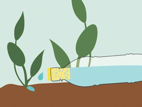 Простой способ полива из пластиковой бутылки