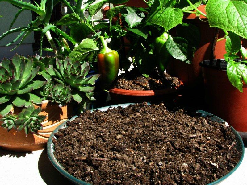 Эм компост - лучшее питание для растений