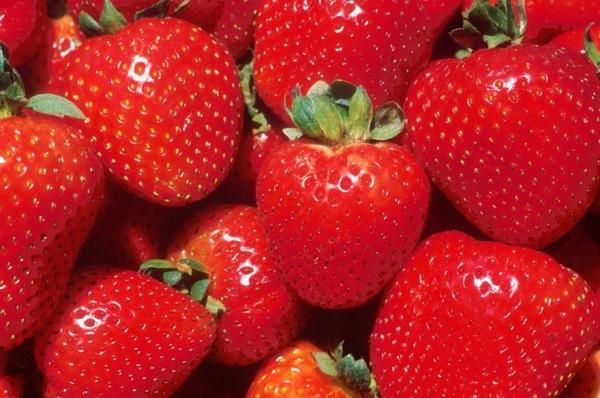 Крупные и спелые ягоды фото