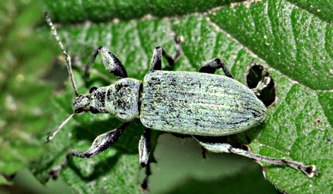 Один из видов клещей на листке