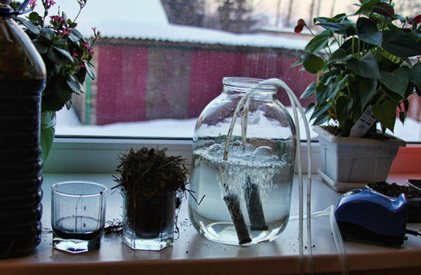 Устройство для приготовления аэрированного чая