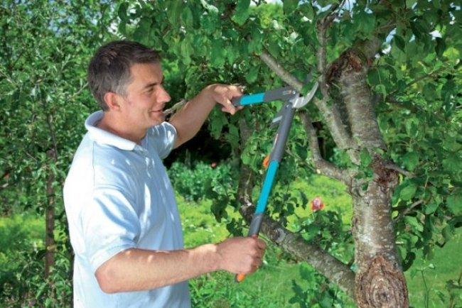 Ножницы - неплохой вариант для обрезки деревьев