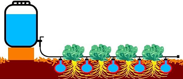 Схема фитильного метода полива