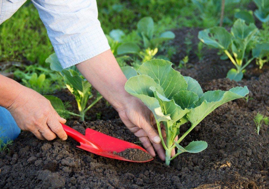 Огородник за работой в земле
